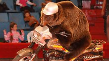 Vielleicht gibt es in Turkmenistan irgendwann auch diesen Bären aus einem sibirischen Zirkus zu sehen.