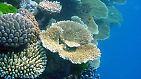 """Denn die """"Regenwälder der Meere"""" gehören zu den am meisten gefährdeten Ökosystemen der Erde."""