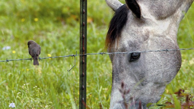 Vom Vogel bis zum Pferd - Zooplus vertreibt Haustierbedarf per Internet.