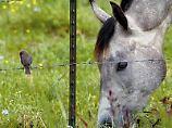 Vom Vogel bis zum Pferd - Zooplus vertreibt Haustierbedarf aller Art per Internet und Katalog. Nach bulligem Start wehrt sich die Aktie gegen eine bärige Fortsetzung.