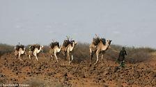 """Die Vereinten Nationen definieren Desertifikation als """"Landverödung in ariden, semiariden und trockenen subhumiden Gebieten infolge verschiedener Faktoren, einschließlich Klimaschwankungen und menschlicher Tätigkeiten""""."""