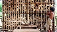 Sie verhungerten, wurden ermordet, zu Tode gefoltert.