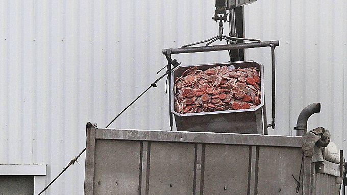 Tonnenweise werden derzeit Lebensmittel vernichtet, weil sie Pferd enthalten.
