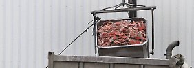 """""""Hochwertiges"""" Fleisch nicht vernichten: CDU-Mann: Pferd aufessen"""