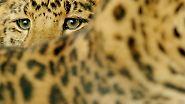 Auch für Leoparden, ...