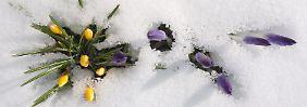 Kaltes Wochenende: Frühling? Fehlanzeige!
