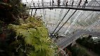"""Futuristisch, spektakulär, riesig: Künstliche """"Superbäume"""" in Singapur"""