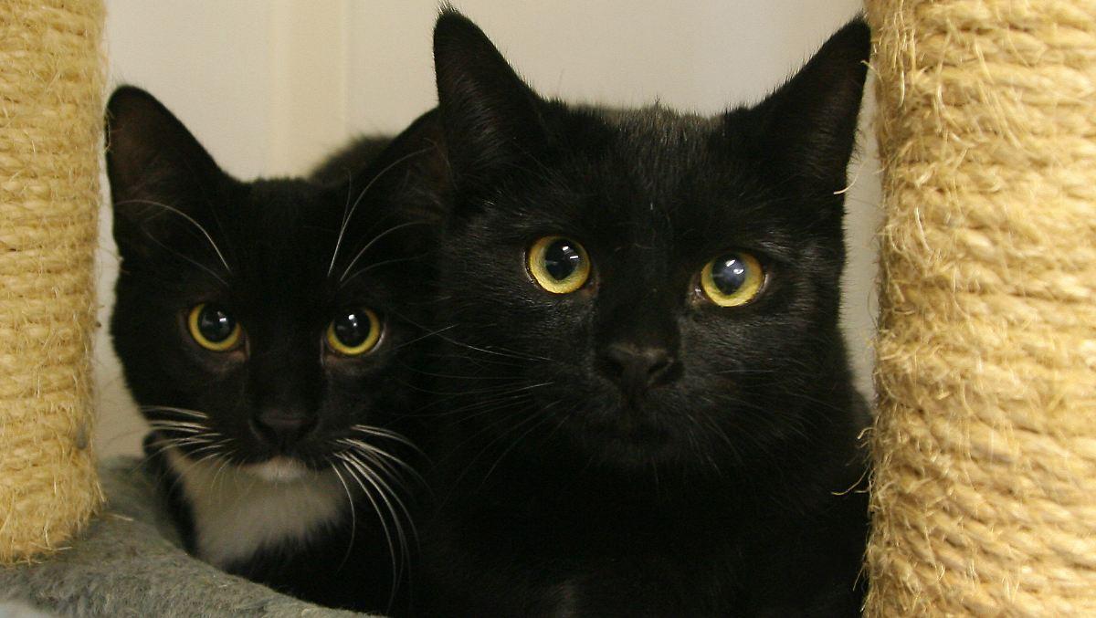 gut gemeint ist nicht gut gemacht leben mit 200 katzen n. Black Bedroom Furniture Sets. Home Design Ideas