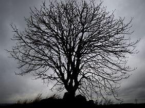 Hauptsymptom einer Depression ist Niedergeschlagenheit; das Leben erscheint düster und freudlos.