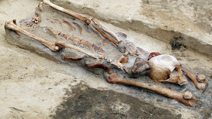 Der Kopf war zwischen den Beinen platziert worden. Ein weiterer Hinweis auf ein Vampirbegräbnis? Oder handelt es sich doch eher um Gehenkte?