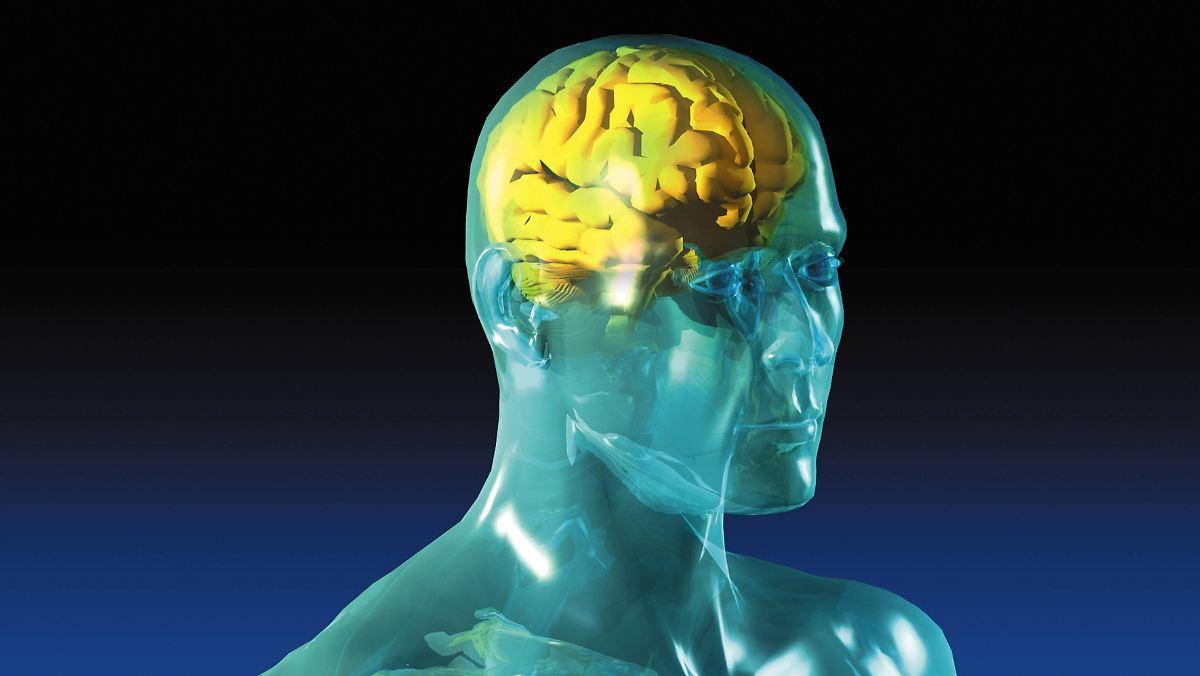 Das Gehirn bei MS Einführung in die Hirnatrophie -