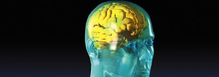 Die große Schaltzentrale: So funktioniert das menschliche Gehirn
