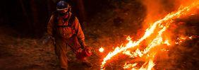 Waldbrand außer Kontrolle: Kalifornien bangt um Yosemite National Park