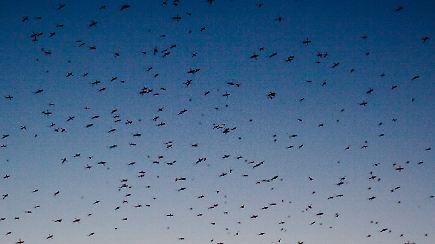 Was gegen die insekten hilft nach der flut kommen die for Was hilft gegen fliegen in der erde
