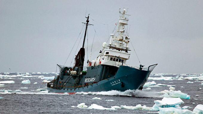 """Ein japanisches Walfangschiff im Südpolarmeer: Das Fleisch der erlegten Wale wird nach der """"wissenschaftlichen Untersuchung"""" verkauft."""