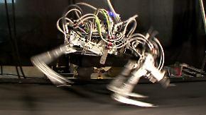 Maschinen mit animalischen Fähigkeiten: Google kauft Roboter-Spezialisten