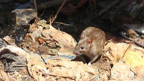 40 Tote innerhalb kurzer Zeit: Pest breitet sich in Madagaskar aus
