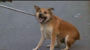 Neues Gesetz gegen Streuner: Straßenhunde in Rumänien werden eingefangen und getötet