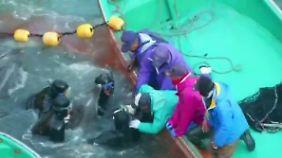 Schockierende Bilder aus Japan: Fischer schlachten jährlich 2000 Delfine