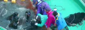 Schockierende Bilder aus Japan: Fischer schlachten jährlich 2000 Delfine ab