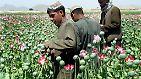 """Schlafmohn steht vor allen Dingen auf Feldern in Ländern des sogenannten """"Goldenen Halbmonds"""" - Afghanistan (im Bild), Pakistan und Iran. 90 Prozent des weltweit verkauften Heroins stammen von hier."""