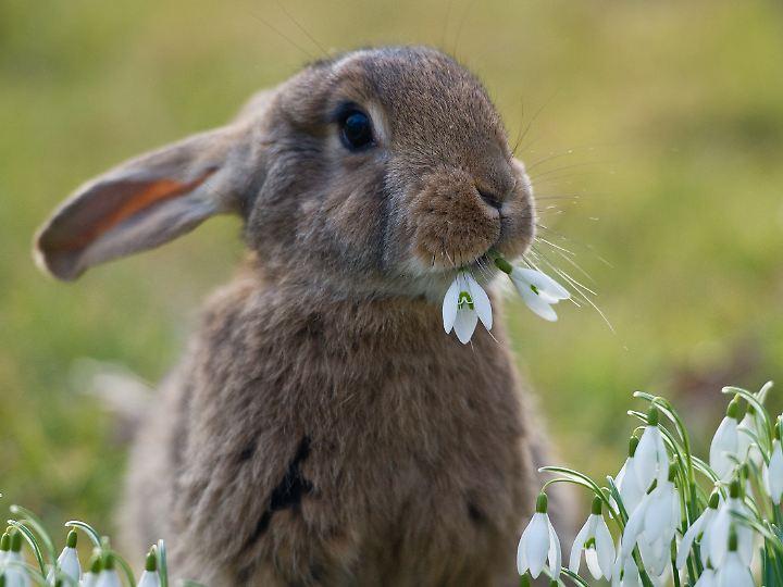 In den Knollen und Zwiebeln von Frühblühern sind oftmals Gifte enthalten, die vor Fraßfeinden schützen sollen.