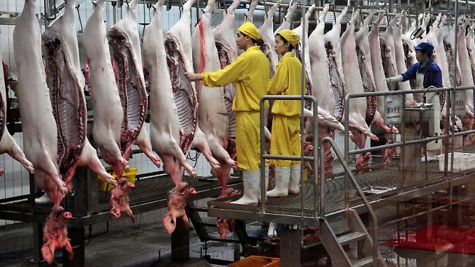 Riesige Stückzahlen: Allein in Deutschland werden pro Quartal rund 15 Millionen Schweine geschlachtet - in China sind es wohl entsprechend mehr.