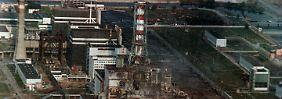 28 Jahre nach Tschernobyl: Wildschweine und Pilze strahlen weiter
