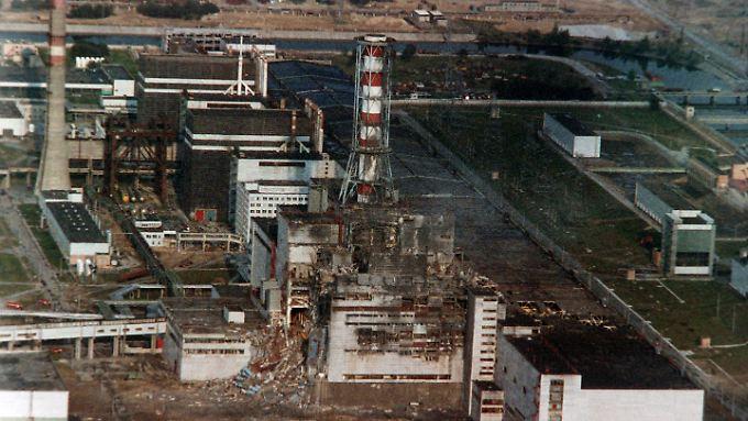 Auch 28 Jahre nach der Atomkatastrophe von Tschernobyl sind heimische Pilze und Wildfleisch teils noch hoch radioaktiv belastet.