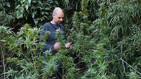 Neuer Schwung für die Wirtschaft?: Uruguay legalisiert Cannabis