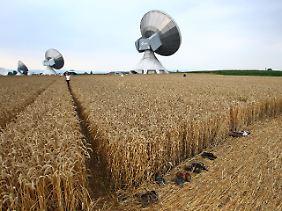 Barfuß durchs Getreide: Am Rand des Kornkreises ziehen manche Besucher ehrfürchtig die Schuhe aus.