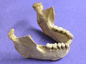 Der Kiefer eines Neandertalers, gefunden in Zafarraya (Spanien).