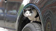 Russlands Konjunkturprogramm: Abwrackprämie und Katze locken