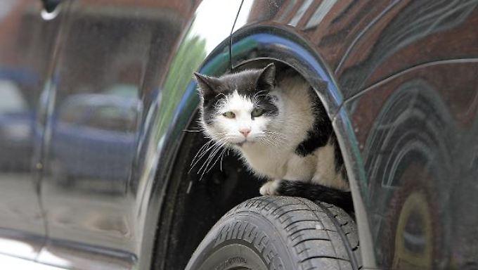 Eine Katze fürs Eigenheim - eine Prämie beim Neuwagenkauf: Russland und die Sberbank wollen die Wirtschaft ankurbeln.