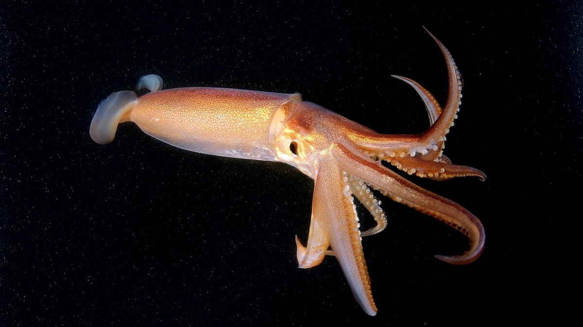Humboldt Kalmar