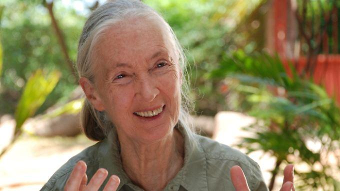 Jane Goodall - keine kennt Schimpansen so gut wie sie!