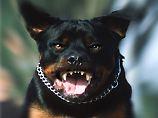 Vielfaches des Hundesteuersatzes: Kampfhundesteuer von 2000 Euro?