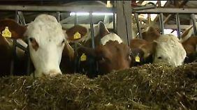 """""""Ein Viertel des Gehalts futsch"""": Dumpingpreise gefährden Existenz der Milchbauern"""