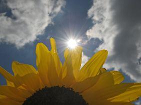 Der Gedanke an wohlig warme Sonnenstrahlen weckt positive Emotionen, zieht uns aber viel weniger in den Bann ...