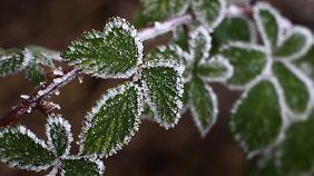 Trüber Dezembertag: Im Norden pfeift ein kräftiger Wind
