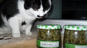 Katze Hanni mit dem Mitbringsel aus der Prignitz.