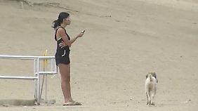 Tierliebe in den USA: Dating-Seiten sind auf den Hund gekommen