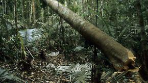 """Warnung von WWF und Club of Rome: """"Wir sind im Begriff, die Regenwälder aufzuessen"""""""