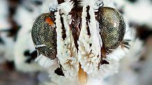 Skurrile Tierwelt am Mekong: Seelenaussauger und schicke Motte entdeckt