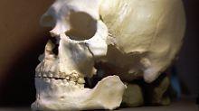"""Indianer kämpfen um Knochen: Herkunft des """"Kennewick-Mannes"""" geklärt"""