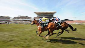 Rennpferde haben ihr Geschwindigkeitsmaximum noch nicht erreicht.