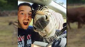 Kecker Serengeti-Park-Bewohner: Selfie mit Zebra macht Studenten zum Internetstar