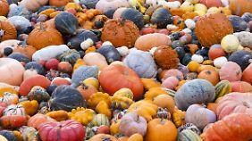 Zierkürbisse in allen Größen und Farben.