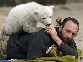 Der vier Monate alte Knut klettert auf seinen Pfleger Thomas Dörflein - auch der war zum Publikumsliebling geworden. Dörflein starb im September 2008.