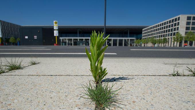 Wenn es ganz dumm läuft, holt sich die Natur das Flughafenfeld zurück bevor die Macher es zurückbauen.